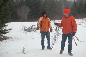 Collecting tamarack bows