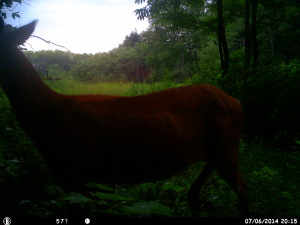 Photos By Trail Camera