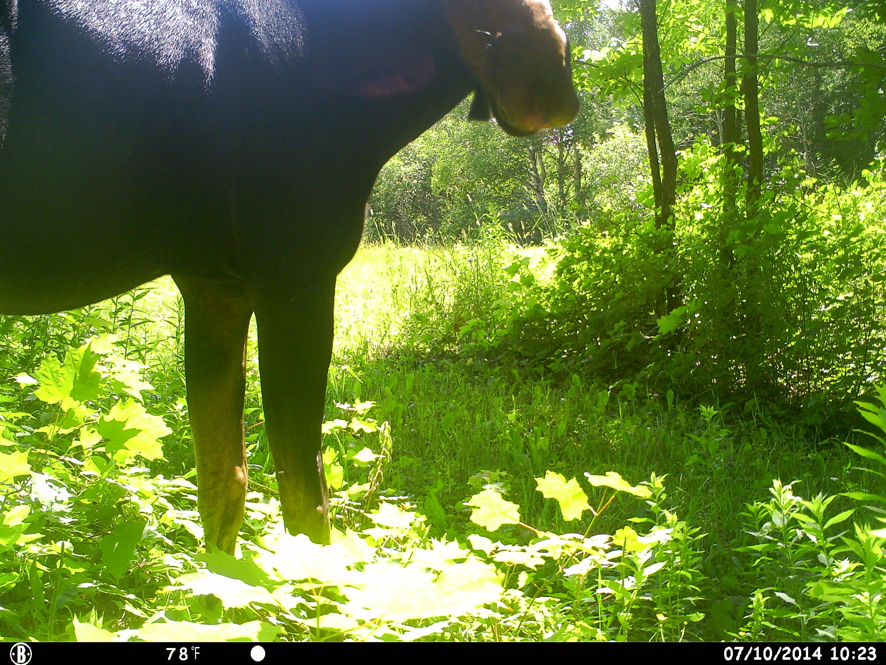 Update from the Farm Cam