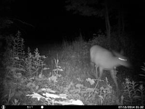 Slightly creepy deer pic