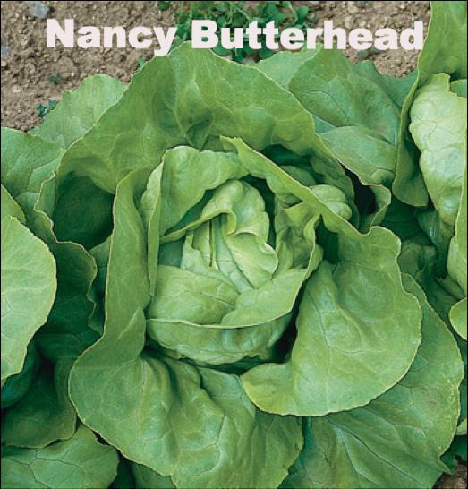 Nancy Lettuce