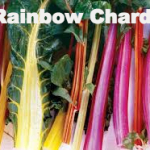 Variety: Swiss Chard Name: Rainbow Color: The Colors of the Rainbow Size: Medium to Large Savoyed Leaves, Thick Stalks   Taste: Tender & Juicy