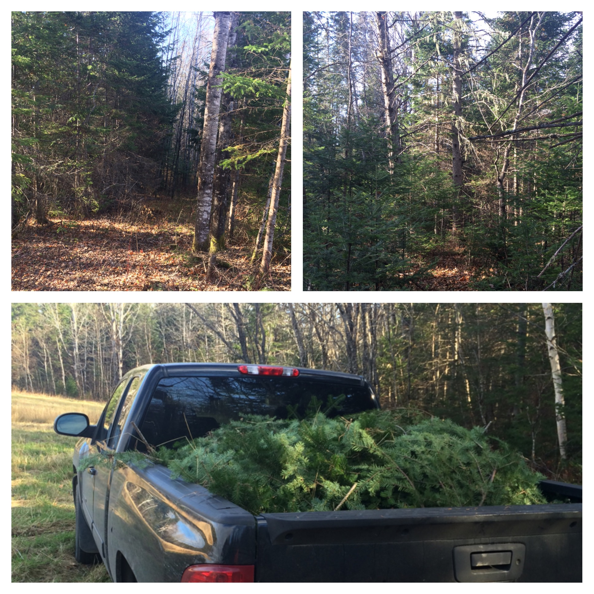 Tremendous Tree Training: Really Recognizing Wreaths