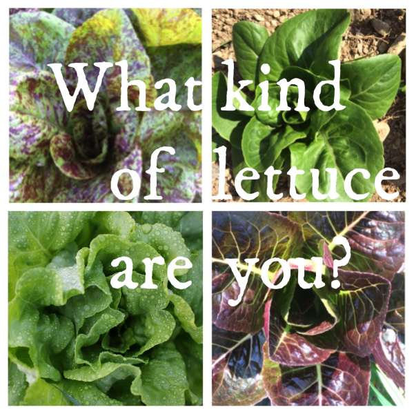 What kind of lettuce are you?